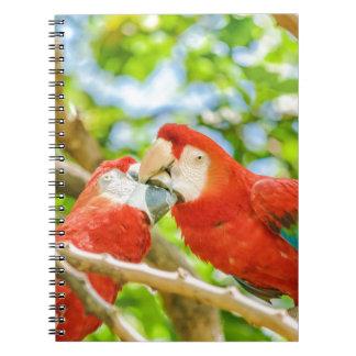 Ecuadorian Parrots at Zoo, Guayaquil, Ecuador Notebooks