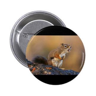 Écureuil de chant macaron rond 5 cm