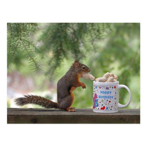 Écureuil de joyeux anniversaire cartes postales