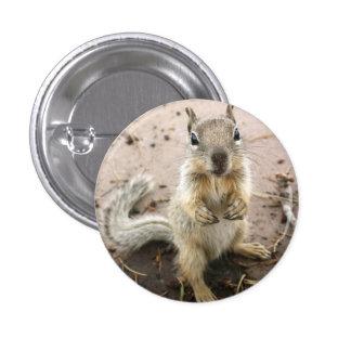 écureuil - photographie de canyon grand macaron rond 2,50 cm
