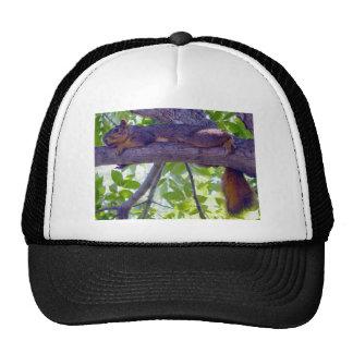 Écureuil s'étendant sur une photo de branche d'arb casquette