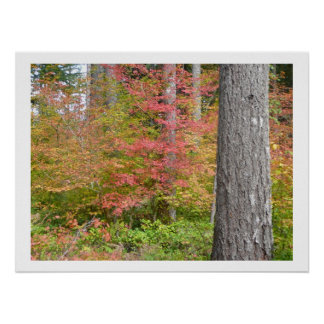 Ed Sutton - Fall Tree Poster