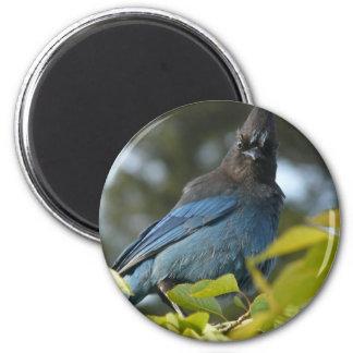 Ed Sutton - Steller Jay 2 Inch Round Magnet