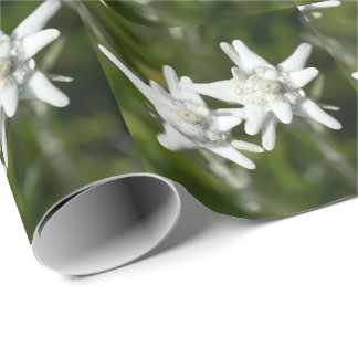 Edelweiss Alpine Flower Wrapping Paper
