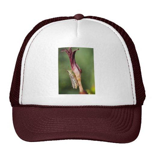 edible beauty mesh hats