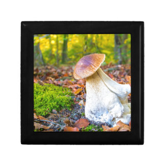Edible porcini mushroom on forest floor in fall gift box