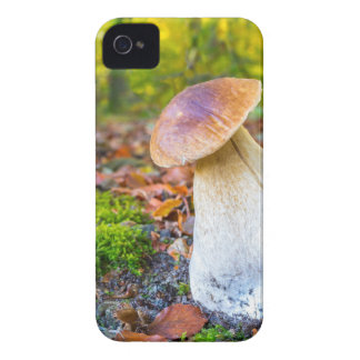 Edible porcini mushroom on forest floor in fall iPhone 4 case