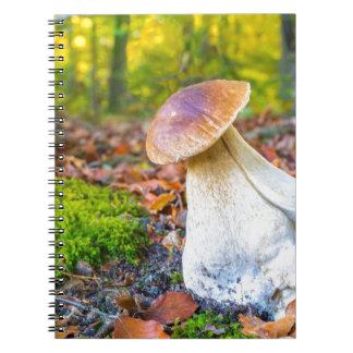 Edible porcini mushroom on forest floor in fall notebooks
