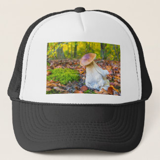 Edible porcini mushroom on forest floor in fall trucker hat