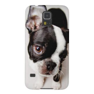 Edison Boston Terrier puppy. Case For Galaxy S5