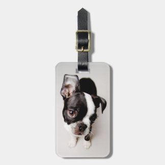 Edison Boston Terrier puppy. Luggage Tag