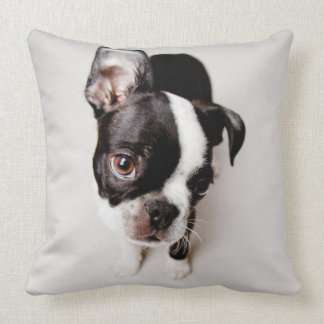 Edison Boston Terrier puppy. Throw Pillow