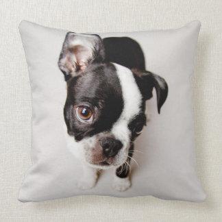Edison Boston Terrier puppy. Throw Pillow