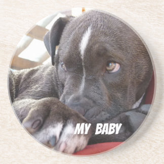Editable Baby Pitbull Puppies Coaster