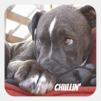 Editable Baby Pitbull Puppies Square Sticker