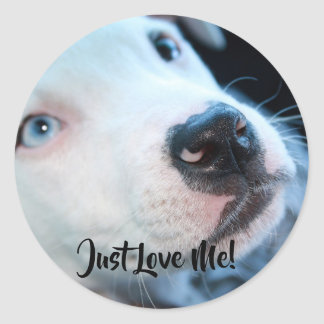 Editable Baby Pitbull White Puppy Classic Round Sticker