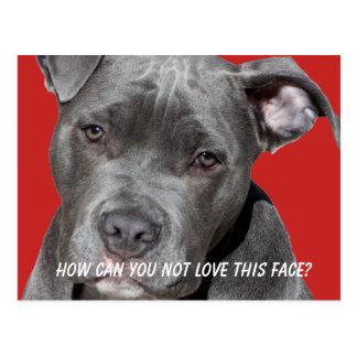 Editable Black Pitbull Postcard