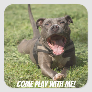 Editable Brown Pitbull In Grass Square Sticker