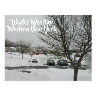 Editable Buffalo Images Winter Storm Postcard