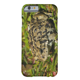edmonton, alberta, canada 2 barely there iPhone 6 case