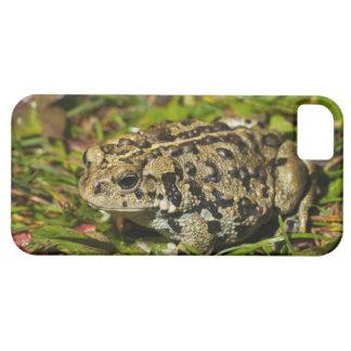 edmonton, alberta, canada 2 iPhone 5 cases