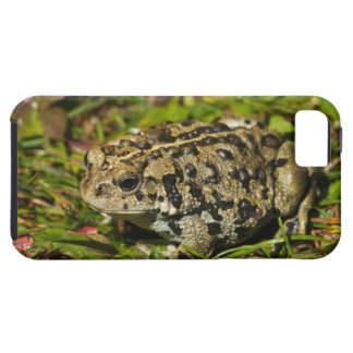 edmonton, alberta, canada 2 iPhone 5 case