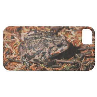 edmonton, alberta, canada 3 iPhone 5 cases