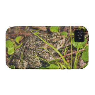 edmonton, alberta, canada Case-Mate iPhone 4 cases