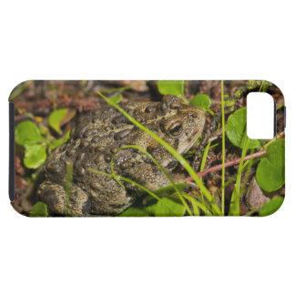 edmonton, alberta, canada iPhone 5 covers