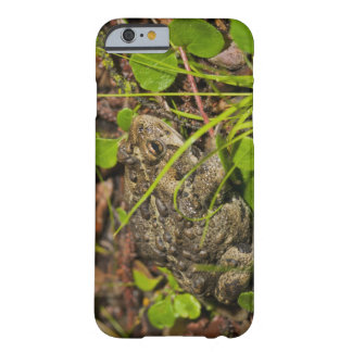 edmonton, alberta, canada barely there iPhone 6 case