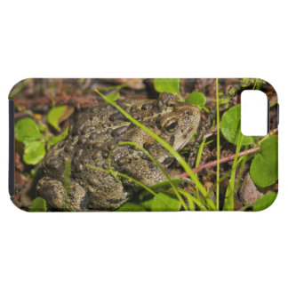 edmonton, alberta, canada iPhone 5 covers