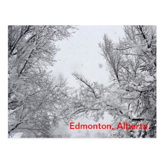 Edmonton, Alberta Winter Post card