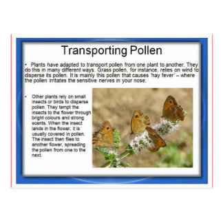 Education, Science, Life, Transporting pollen Postcard