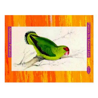 Edward Lear. Abyssinian Parakeet. Postcard