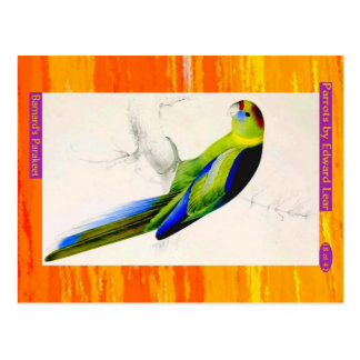Edward Lear. Barnard's Parakeet. Postcard