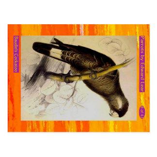 Edward Lear. Baudin's Cockatoo. Postcard