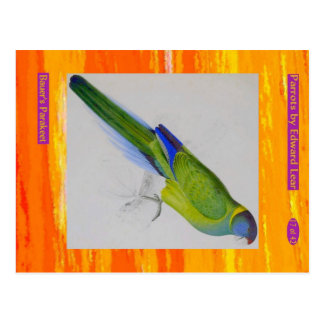 Edward Lear. Bauer's Parakeet. Postcard