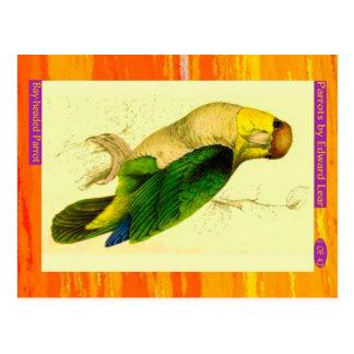 Edward Lear. Bay-headed Parrot. Postcard