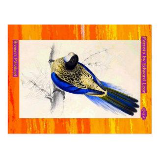 Edward Lear. Brown's Parakeet. Postcard