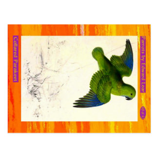 Edward Lear. Collared Parakeet. Postcard