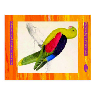 Edward Lear. Crimson-winged Parakeet. Adult male. Postcard