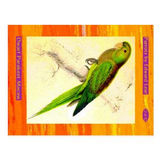Edward Lear. Dwarf Parakeet Macaw. Postcard