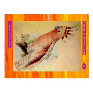 Edward Lear. Leadbeater's Cockatoo. Postcard
