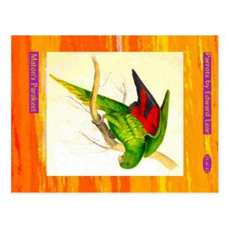 Edward Lear. Maton's Parakeet. Postcard