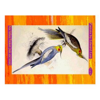 Edward Lear. New Holland Parakeet. Male and female Postcard