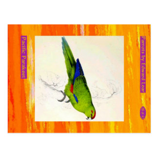 Edward Lear. Pacific Parakeet. Postcard