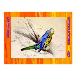 Edward Lear. Pale-headed Parakeet. Postcard