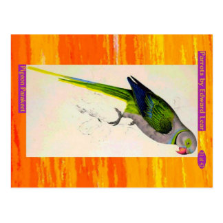 Edward Lear. Pigeon Parakeet. Postcard