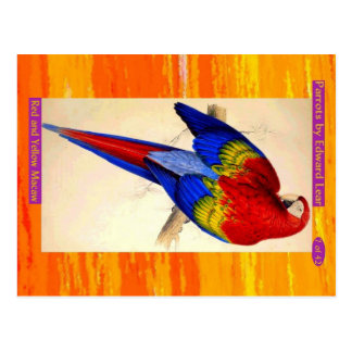 Edward Lear. Red and Yellow Macaw. Postcard