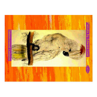 Edward Lear. Salmon-crested Cockatoo. Postcard